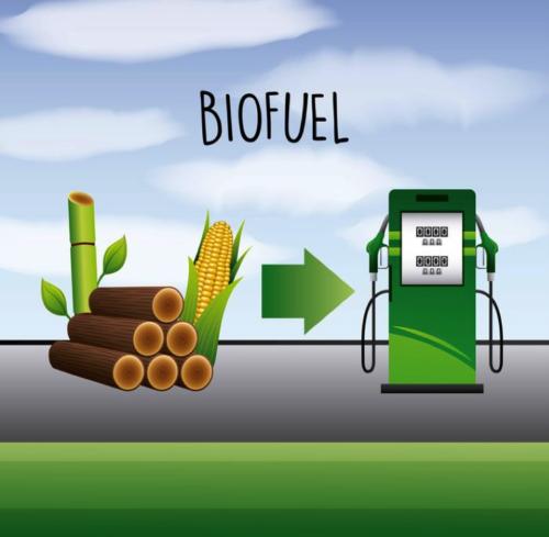 biofuel stocks